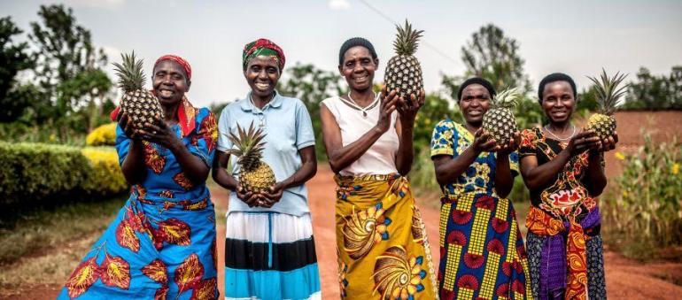 pine rwanda