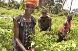 StakeHolders Urge Government To Empower Women In The Agricultutral Sector