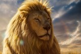Become A Lion Among Sheep With These 10 Daily Rituals