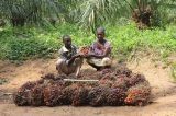 One Hundred Years Later, Heart of Congo Ships Oil Again