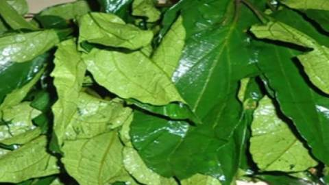 Natural Remedies Of Pumpkin Leaves(Ugwu)