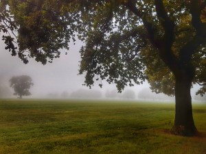a large tree growing on the right of the photo with branches sprading over the top and to the right. In the background across the grass there are more trees just visible through the mist