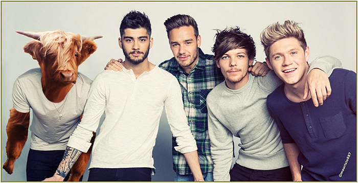 one-direction-cow