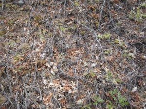 Can You Find the Snake?