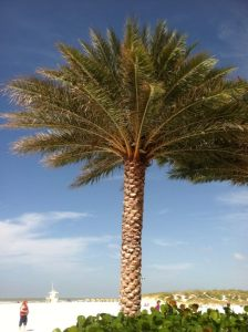 FL Palm