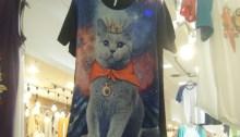 Featured Photograph: Diva Kitty