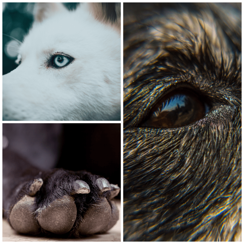 Macro Photography Ideas Dog Pets