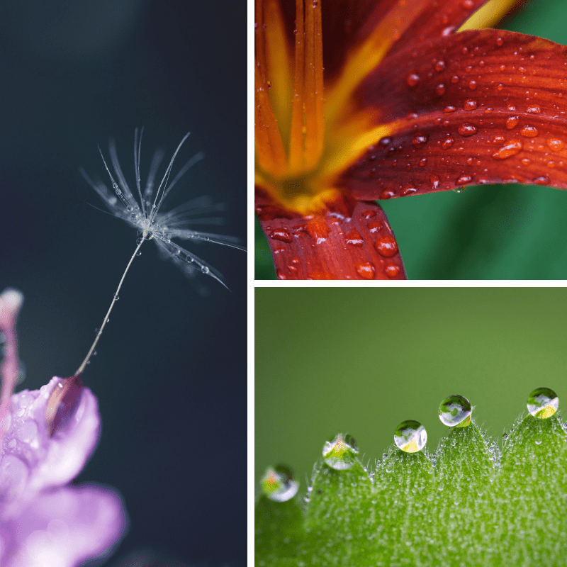 macro photography ideas water droplets