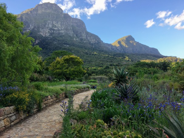 what to do in cape town kirstenbosch gardens bontanical