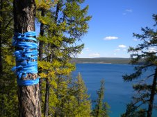 Lake Huvsgul in early fall. The blue scarves are a symbol for the eternal blue sky. They are tied around trees, lamp posts, and many other structures for good luck and fortune.