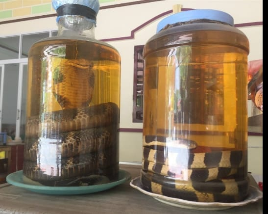 Here's a larger bottle of snake wine, in case the other wasn't enough