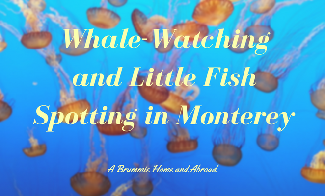 USA Sept 2010 – Whale-watching and little fish spotting in Monterey