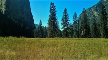 El Capitan Meadow, Yosemite