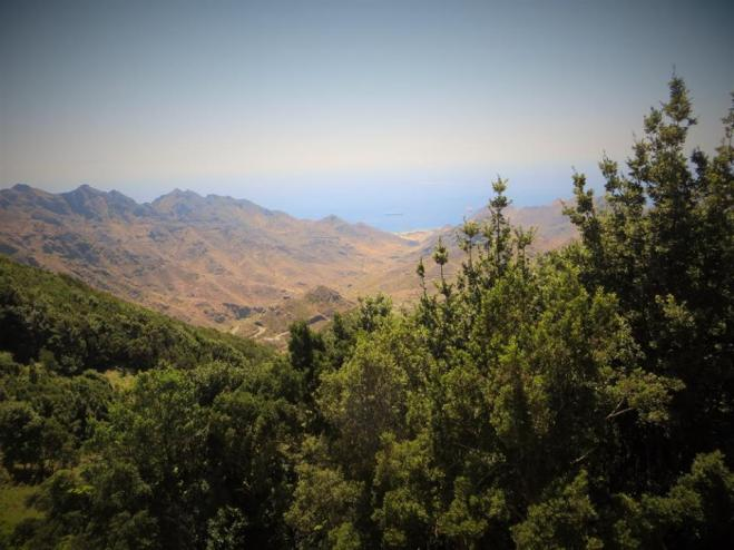 Above the clouds and the treetops, Parque Rural Anaga, Tenerife