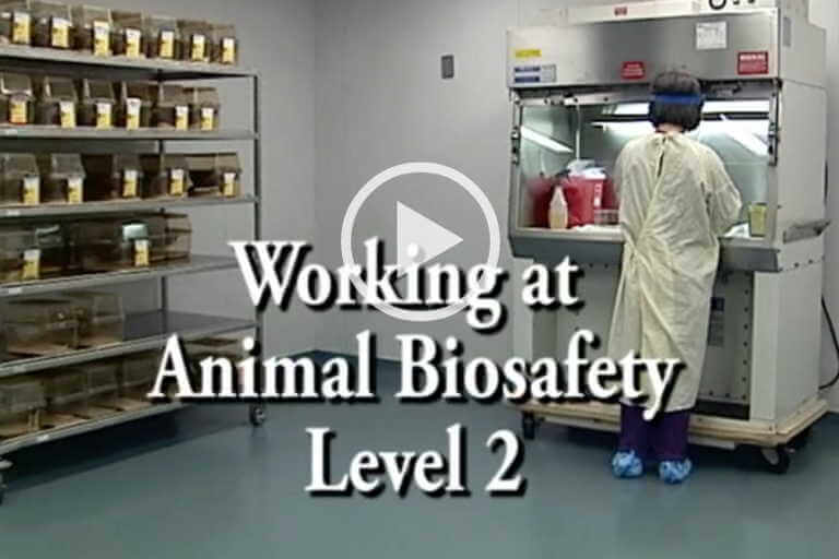 Working at Animal Biosafety Level 2