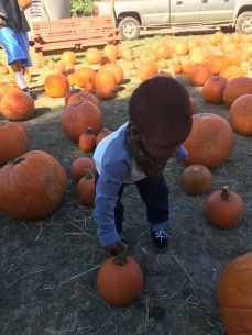 Tiny pumpkin for little big man