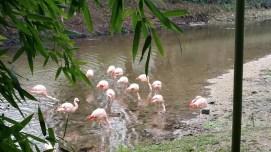 Flamingos. In France.