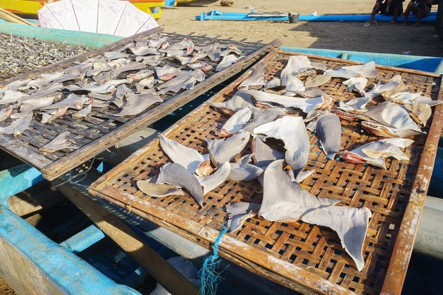 UK to introduce world-leading ban on shark fin trade