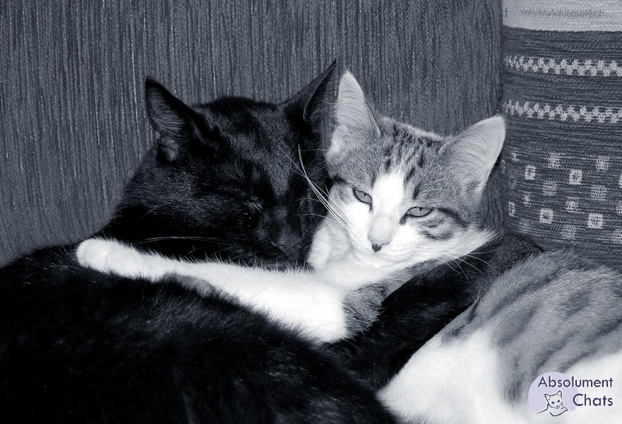 Les chats sont dadorables créatures et aiment leurs maîtres par-dessus.