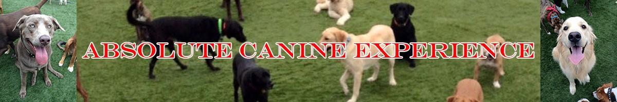 dog day care dog