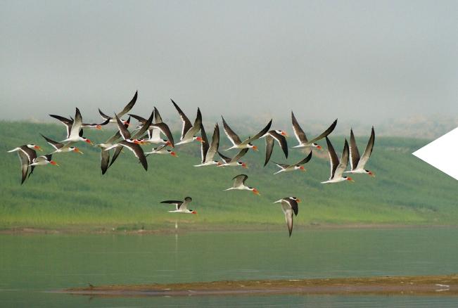 Ethiopia Tours - Paradise of Birds