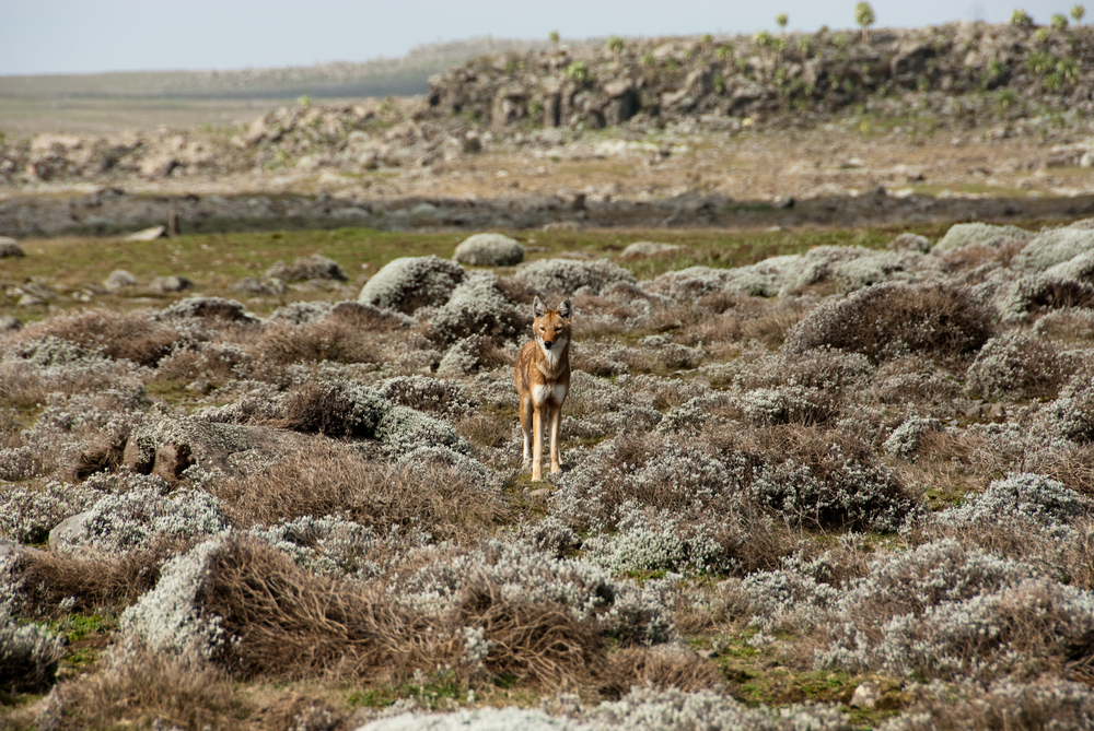 Bale Mountains National Park - Beautiful Scenery