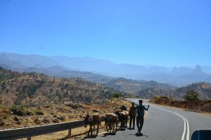 Donkeys on Ethiopian Roads. Your Checklist to Choosing the Right Ethiopian Travel Agency in 2020. Absolute Ethiopia