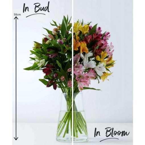 Rainbow Alstroemeria Bouquet, 16 Flowers