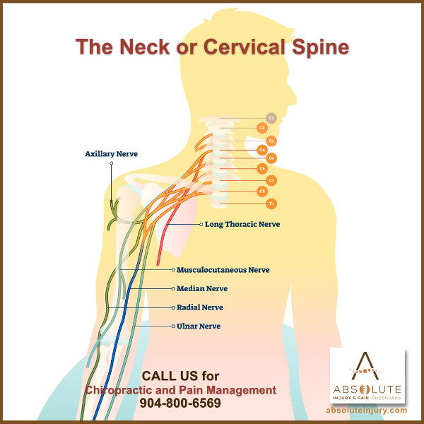 nerves in neck and shoulder diagram honda xr 125 wiring understanding nerve pain through spine anatomy absolute injury spinal cervical
