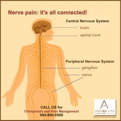 Nerves In Neck And Shoulder Diagram Landscape It Understanding Nerve Pain Through Spine Anatomy Absolute Injury Spinal