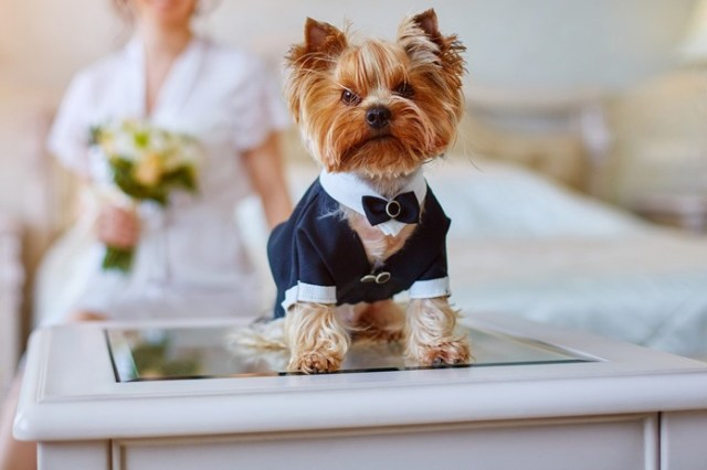 The lowdown on pets at weddings – and the cost