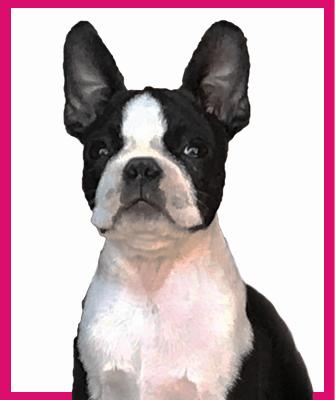 Lulu portre