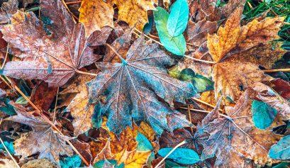 Winter getaways leaves