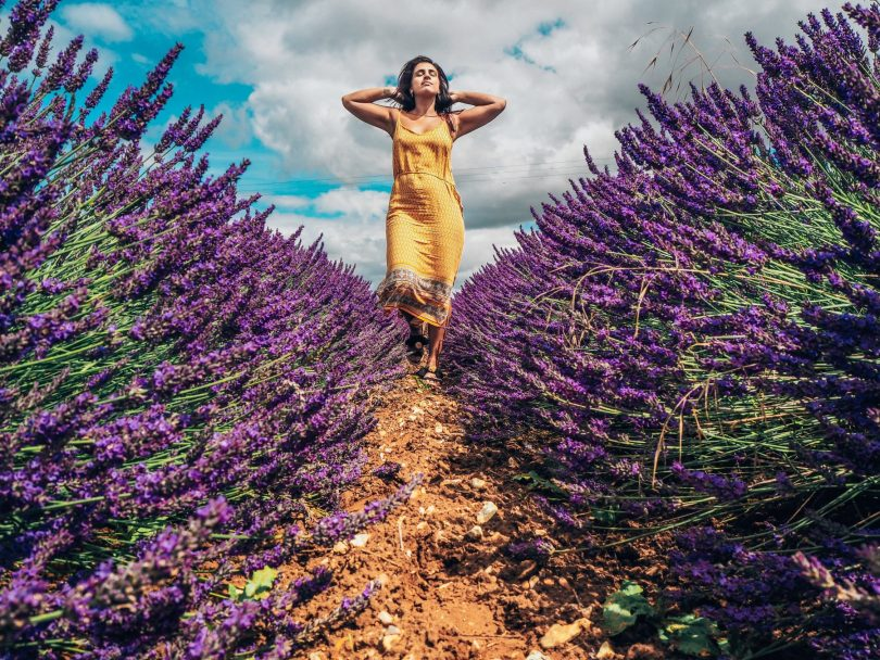 Absolutely Lucy in the lavender fields