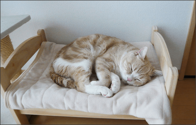 Tempat Tidur Kucing Pemilik Kucing Jepang Mengubah