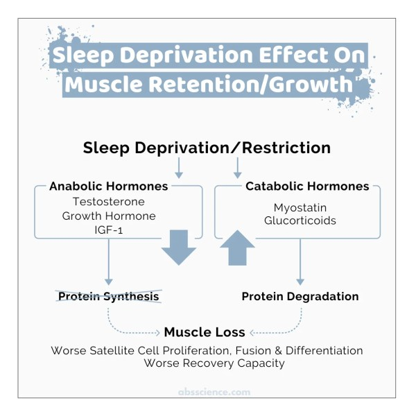 Sleep deprivation and muscle loss