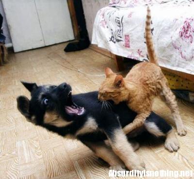 Come Cani e Gatti