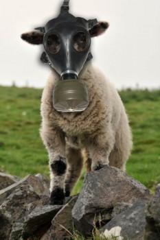 Pecore anti flautulenze