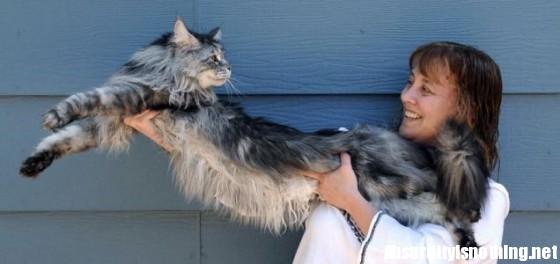 Il gatto più lungo del mondo