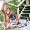 Suryia e Roscoe (3)