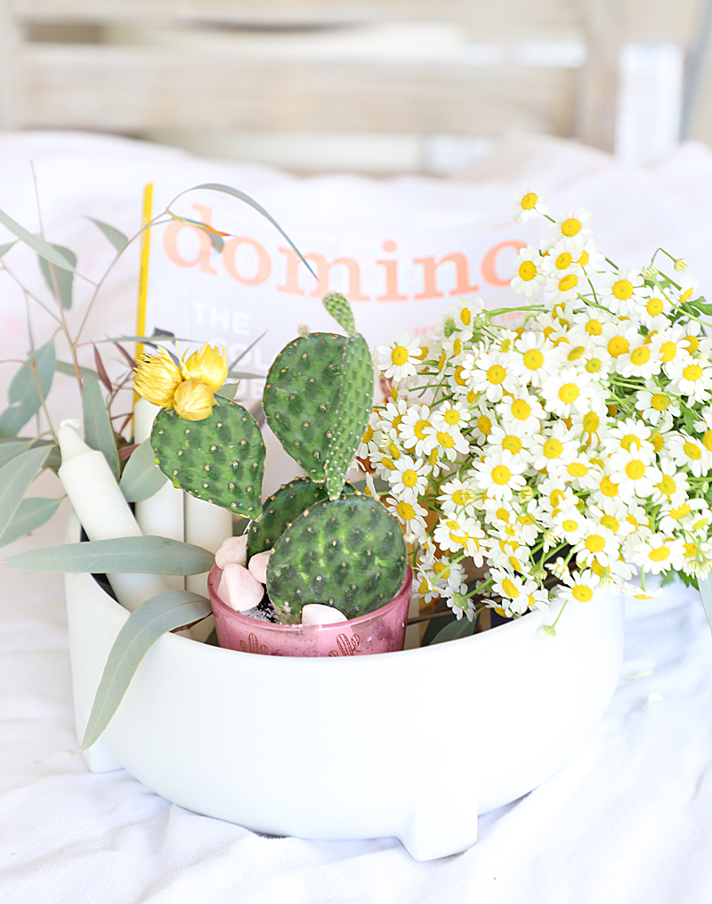 cactus gift basket with chamomile