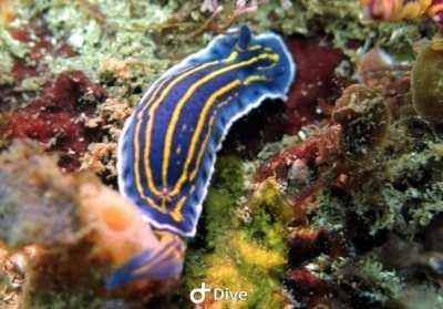 nudibranquiofelimare1