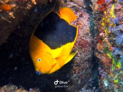 peixe tricolor