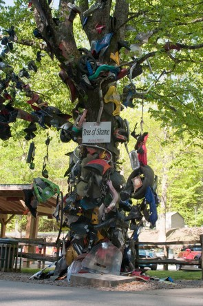 The 'Tree of Shame' at Deal's Gap motorcycle resort.