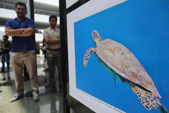 jayvee fernandez green sea turtle