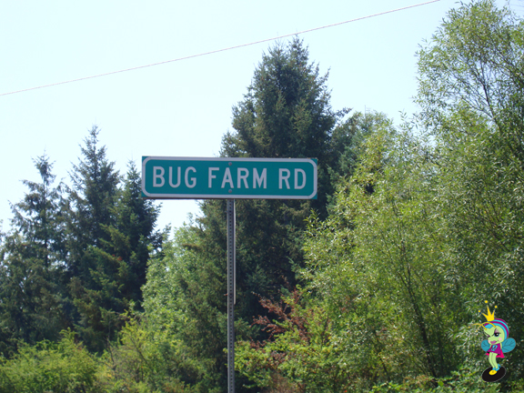 Bug Farm Rd!