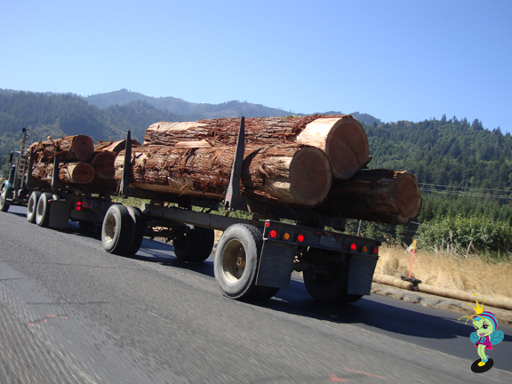 Logging is a major industry in Oregon and Northern California