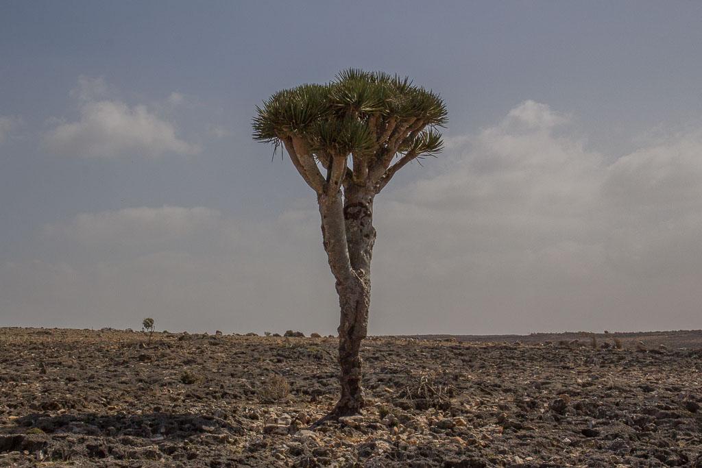 Ook de prehistorische natuur is slachtoffer, in Jemen