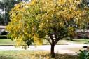 2008-11-14_autumn-ahptree