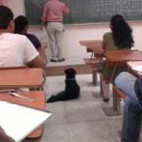 كلب في محاضرة